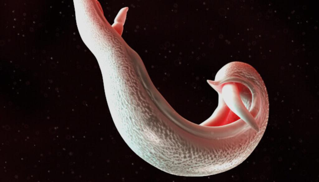 bilharziose-schistosomiasis-zb1